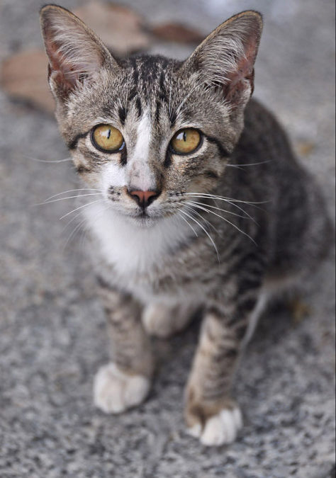 Tajski kot – Tajlandia cz.1