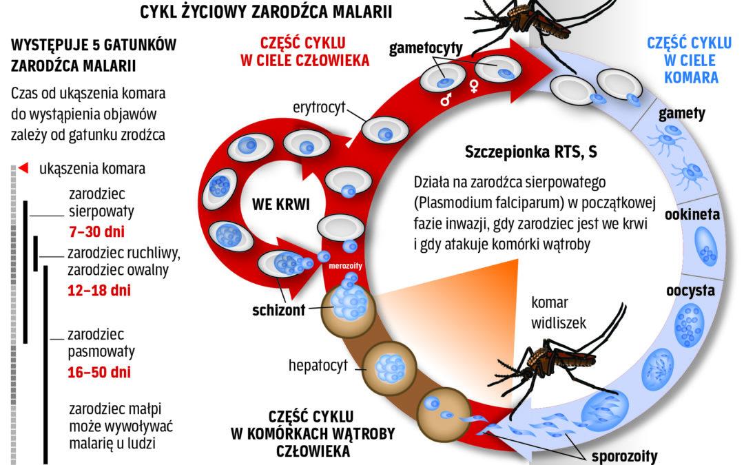 Szczepieniami w malarię